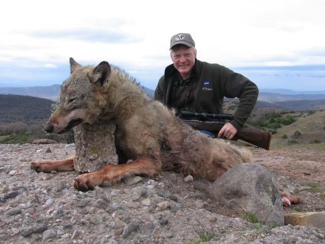 Lov na volk vo makedonija